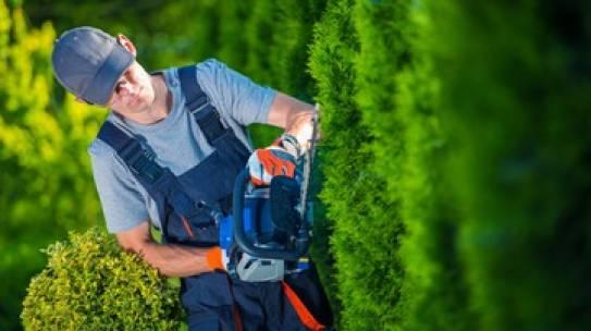 Manutentori del verde, nuovi requisiti obbligatori